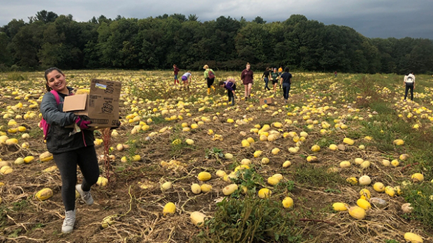 photo of a smiling young woman carrying a box of vegetables in the foreground of a large field of spaghetti squash, oblong yellow vegetables, while a dozen others in the background also gather the squash.
